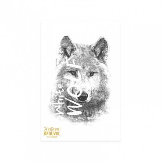 Carte postale white wolf