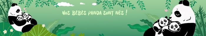La naissance des bébés pandas