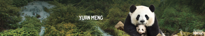 Yuan Meng